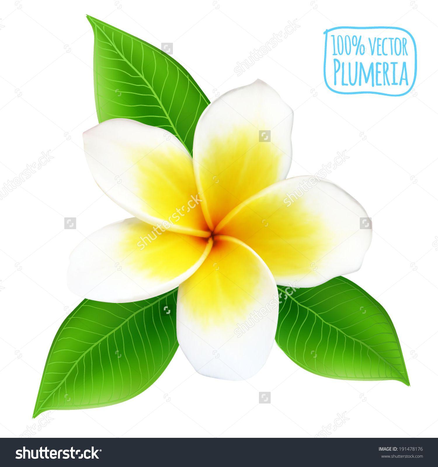 Plumeria Flower Stock Vectors Vector Clip Art Plumeria Plumeria Tattoo Flowers