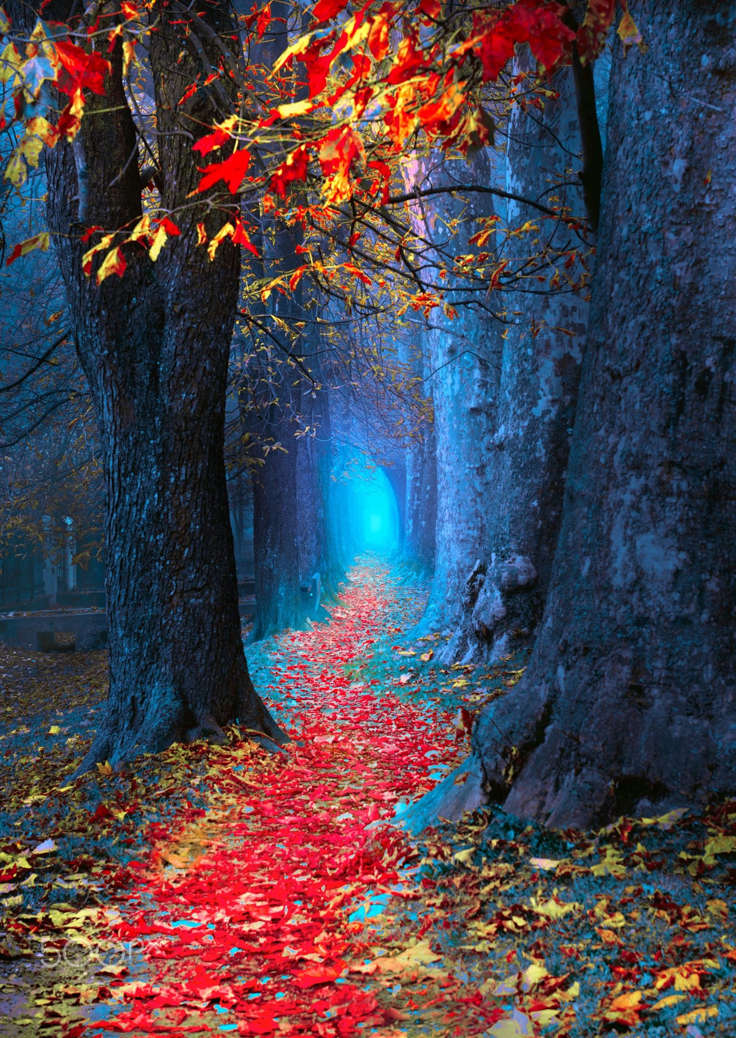 Autumn Magic Location Ilidza Sarajevo Bosnia Beautiful Nature Wallpaper Nature Wallpaper Nature