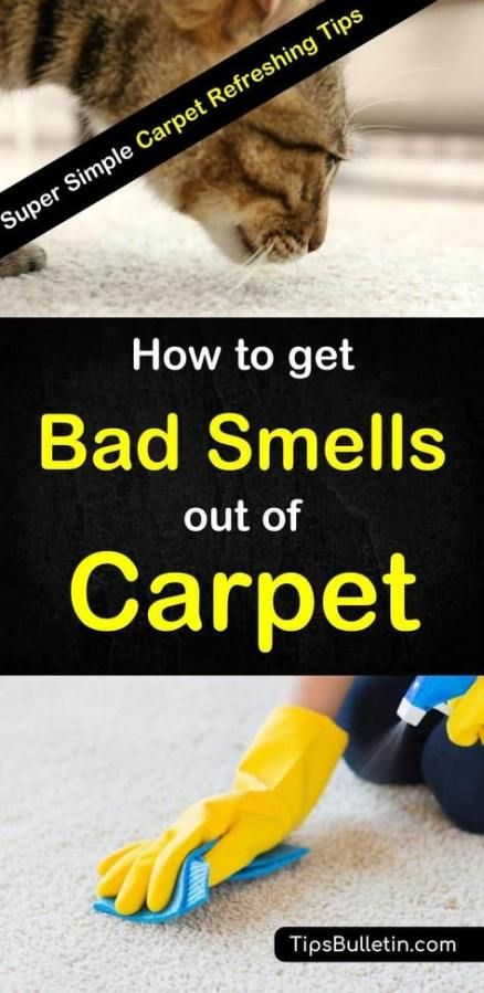 61 Trendy Ideas For Dogs Ideas For House Baking Soda Dogs House Baking Carpet Smell Cleaning Hacks Deep Cleaning Tips