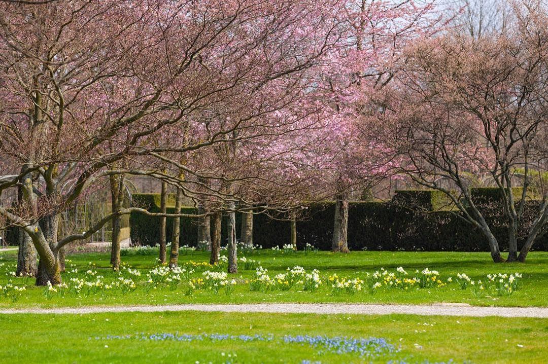 #press there many flowers in #britzergarten #neukölln #kirschblüten #cherryblossom #桜