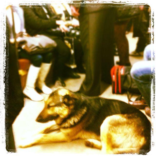 Pye-dog in metro morning : go home?