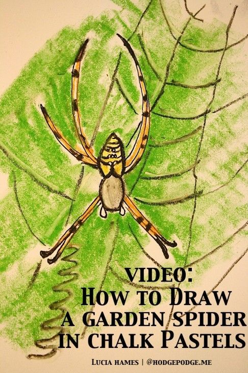 How to Draw a Garden Spider With Chalk Pastels | Spider Activities ...