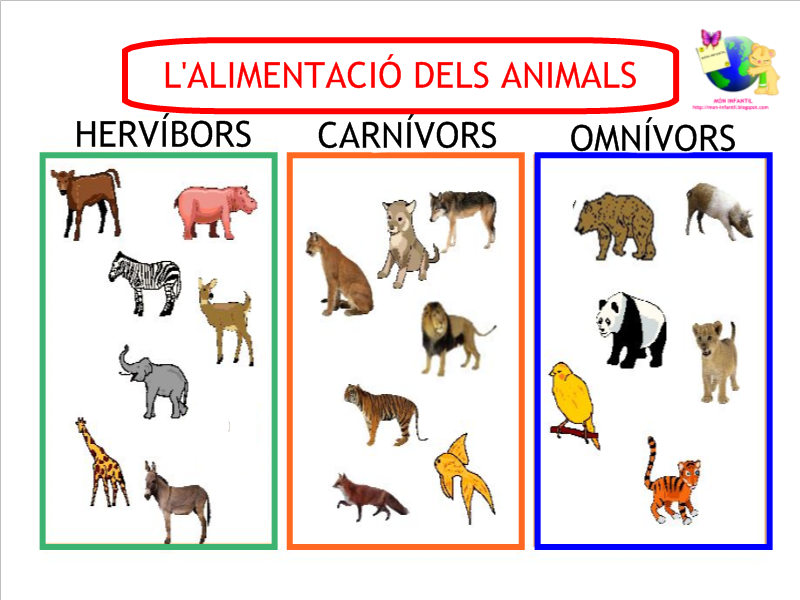 Sinttulo1png 800600 pxeles  Animales  Pinterest
