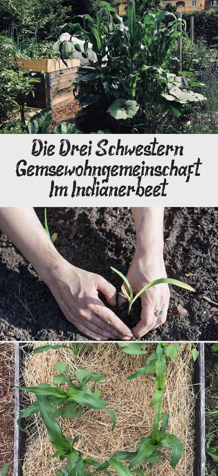Die Drei Schwestern In 2020 Fascinating Herbs Spring
