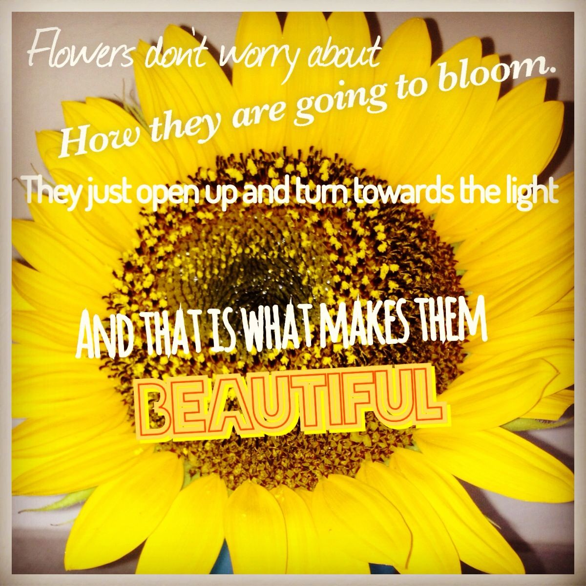 Flower Quote Pick Me Up Quotes 3 Pinterest Inspirational