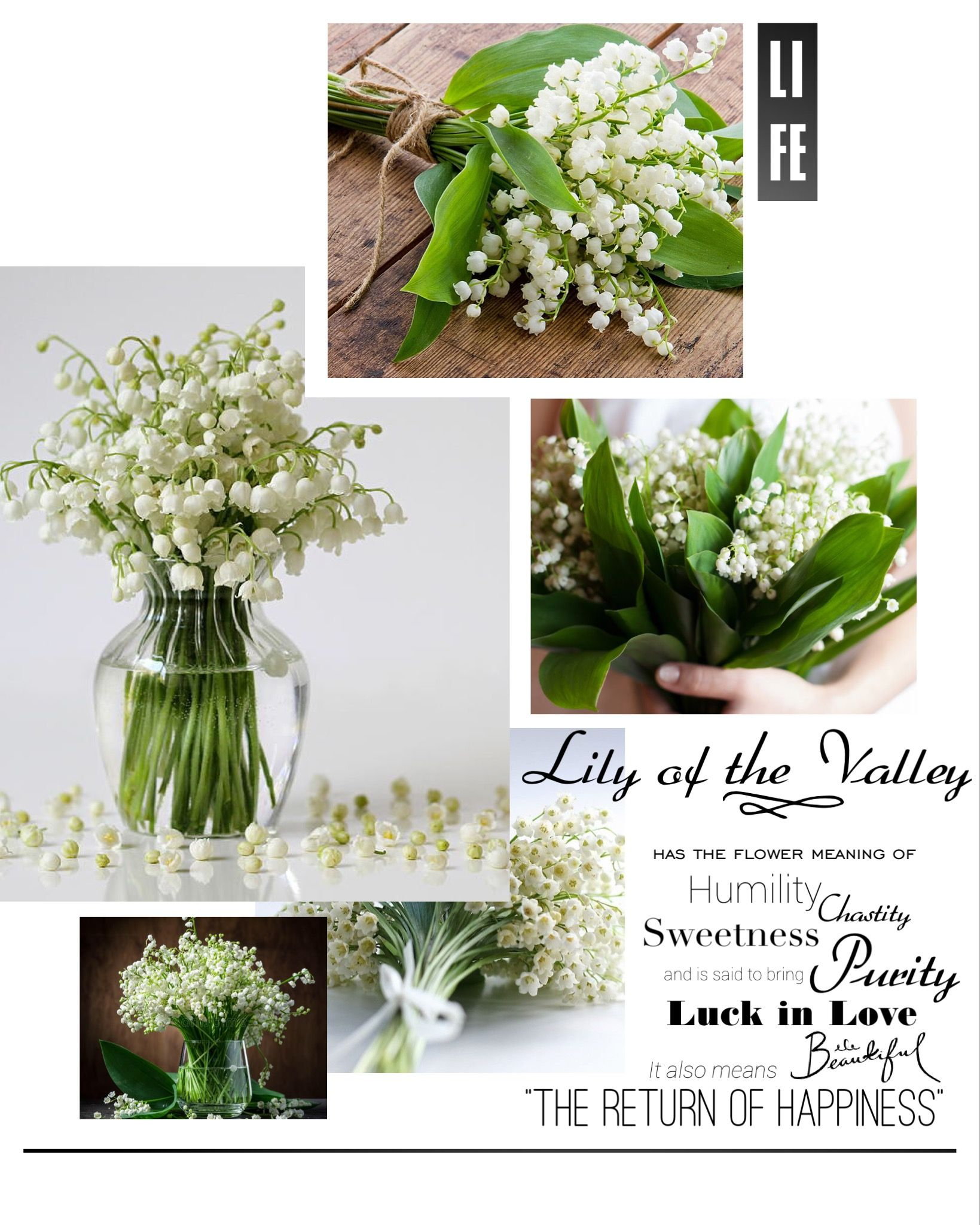 Lily of the valley has the flower meaning of humility