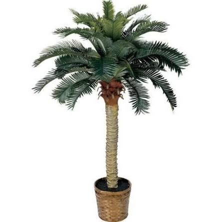 indoor palm trees for sale - Google Search   living room ...