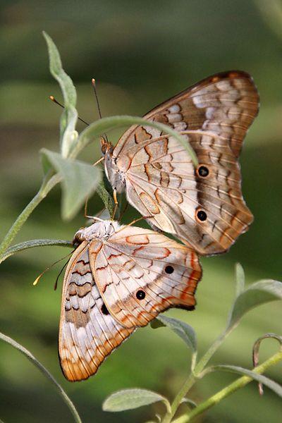 Butterflies - moths