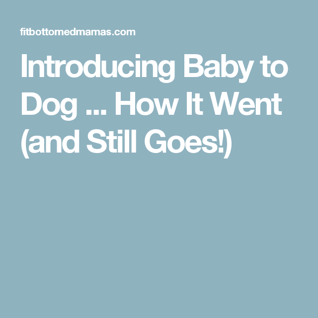 Introducing Baby to Dog ... How It Went (and Still Goes!)