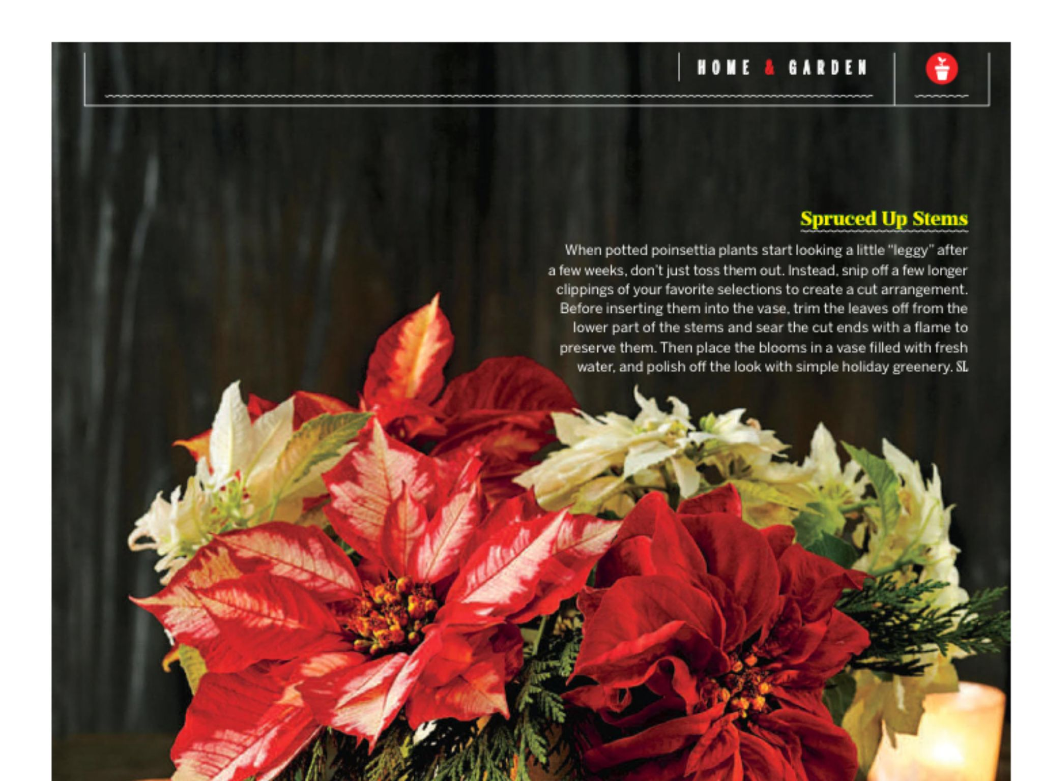 """Poinsettias Reimagined"" from Southern Living, December"