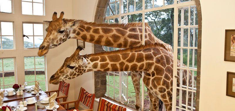 The Giraffe Manor in Nairobi, Kenya.