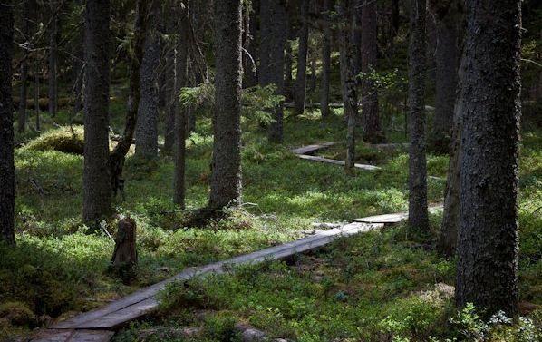 Leuku Forest - Google Search