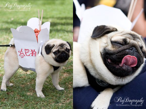 Chinese Takeout Pugs Pugs In Costume Pug Love