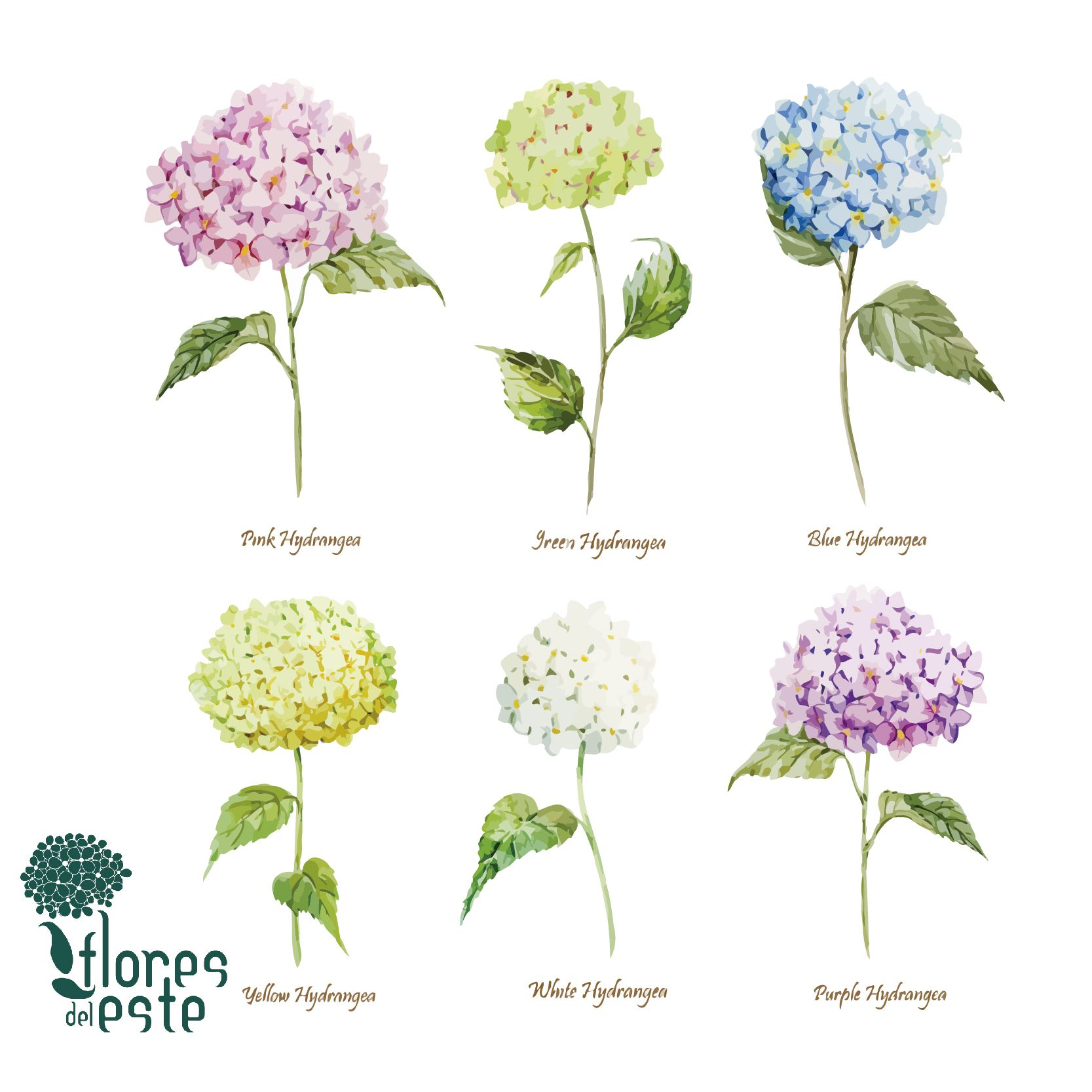 Do You Know The Meaning Of Hydrangeas Colors You Will Know It Floresdeleste Bea Watercolor Hydrangea Watercolor Flowers Pattern Flower Illustration