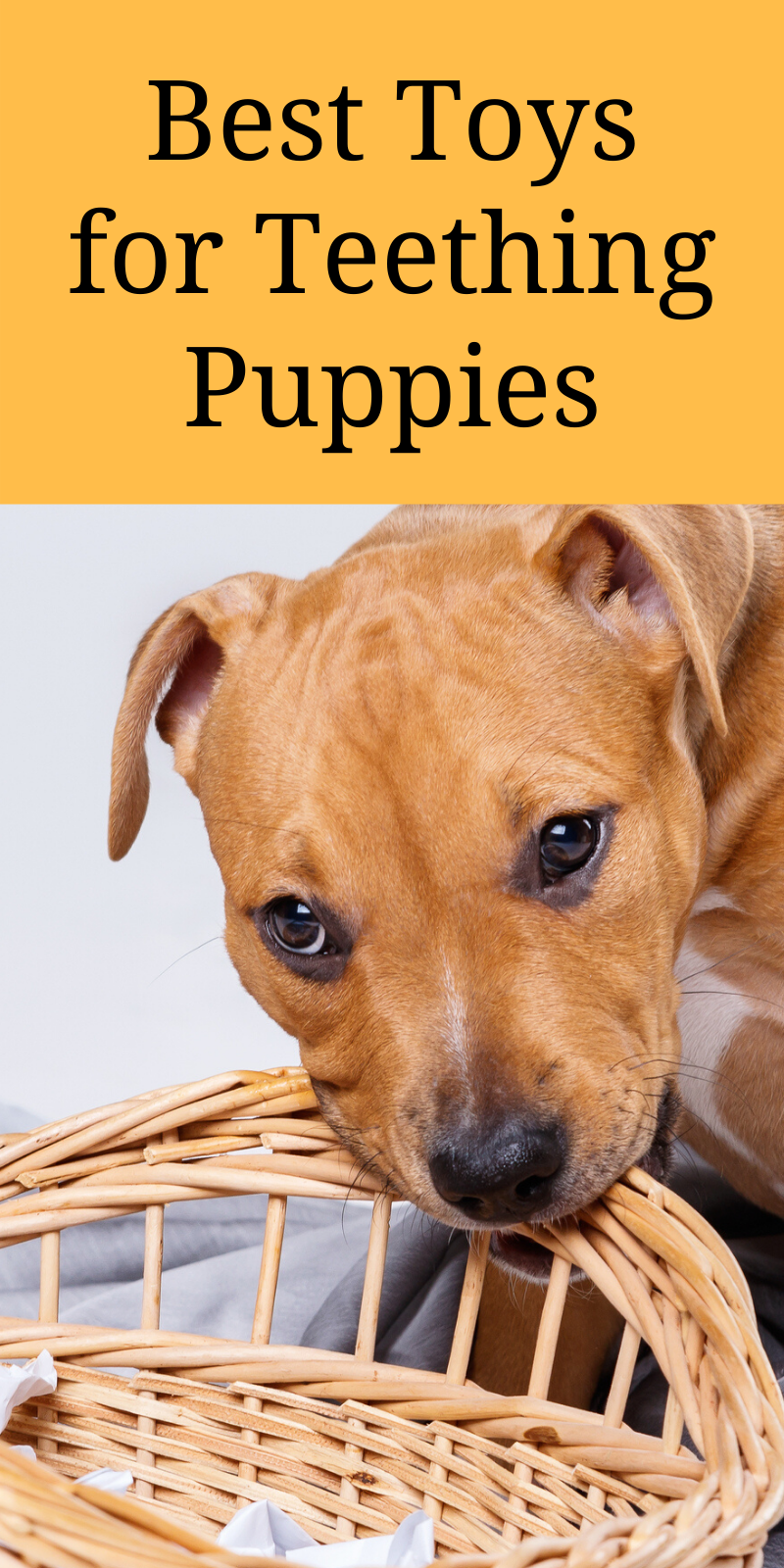 Best Toys For Teething Puppies Top Staffy Teething Toy Reviews In 2020 Puppies Staffy Dog Cute Dog Collars