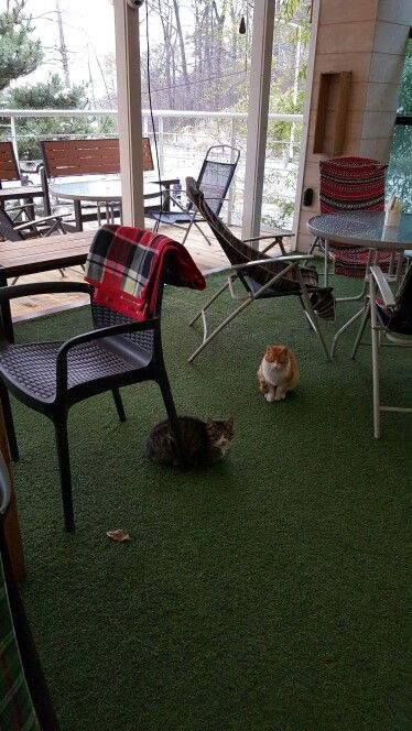 Cat and humen 사람을 좋아하는 고양이