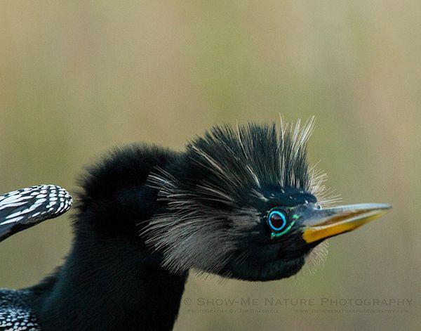 Birds – Tybee Island Marine Center
