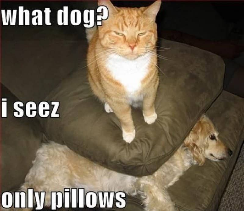 30 Funny Cat Vs Dog Memes To Prove Who S The Boss Catmemes
