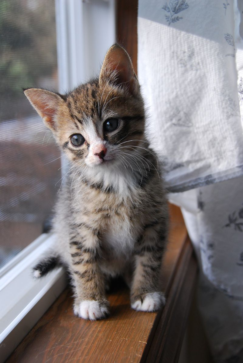 A New Kitten Will Turn Your House Upside Down But At The Same Time Make Everything Seem Right Jo Kittinger Cats Kittens Cutest Cute Cats