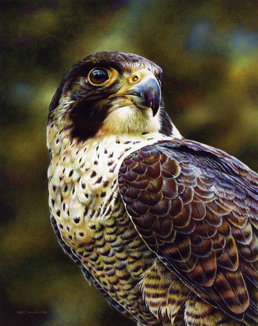 Peregrine Falcon Painting By Esthervanhulsen On Deviantart With Images Peregrine Falcon Peregrine Wildlife Paintings
