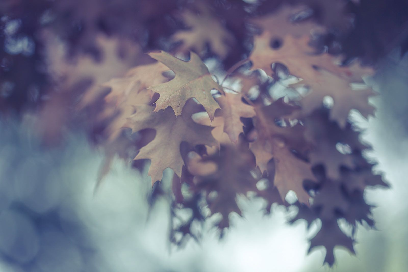 Bienvenido otoño!! #bienvenidootoño Bienvenido otoño!! | by magova #bienvenidootoño Bienvenido otoño!! #bienvenidootoño Bienvenido otoño!! | by magova #bienvenidootoño Bienvenido otoño!! #bienvenidootoño Bienvenido otoño!! | by magova #bienvenidootoño Bienvenido otoño!! #bienvenidootoño Bienvenido otoño!! | by magova #bienvenidootoño Bienvenido otoño!! #bienvenidootoño Bienvenido otoño!! | by magova #bienvenidootoño Bienvenido otoño!! #bienvenidootoño Bienvenido otoño!! | #bienvenidootoño