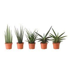 Planten - Potplanten | IKEA