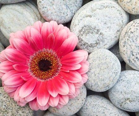 76 best Gulmohar images on Pinterest | Delonix regia, Flame tree ...