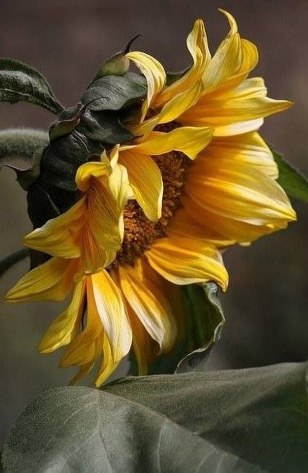 Sun flower by Tracey and Edith herring