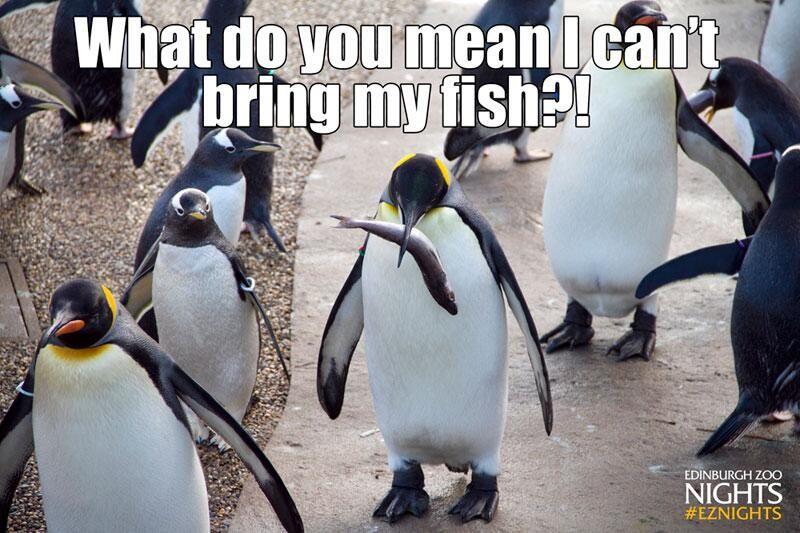 Edinburgh Zoo On Twitter Edinburgh Zoo Penguins Zoo