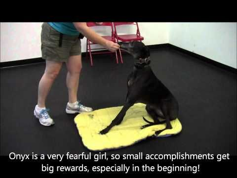 Greyhound Sit Youtube With Images Teach Dog To Come
