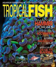 The March 2012 issue of TFH had an underlying scuba diving theme and featured articles on hammer corals, aquaculturing corals, a newly imported goby, and much more!