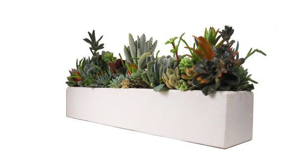 Succulent Concrete Centerpiece Arrangement 24 Quot Large White