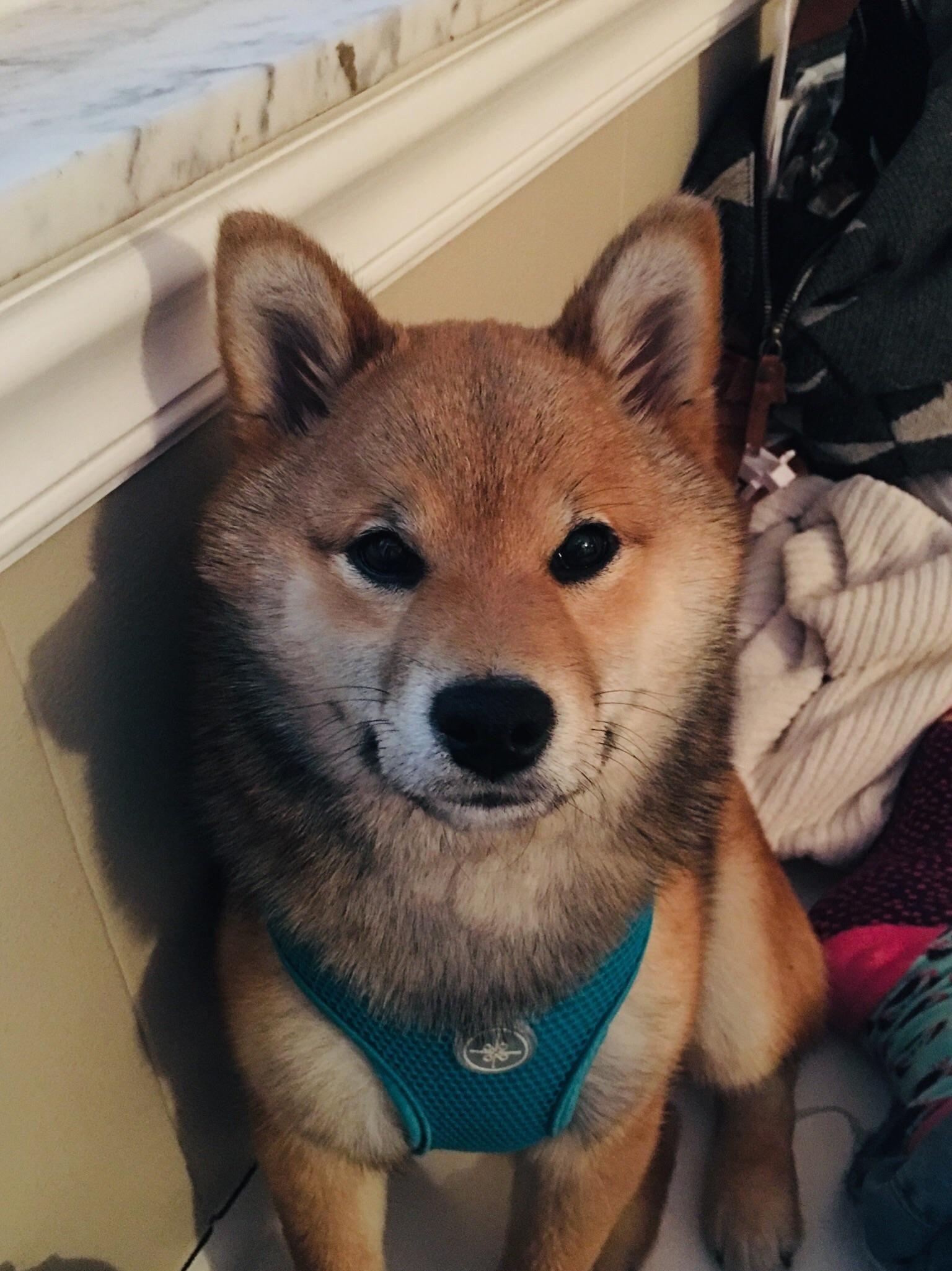 Good Morning Cute Animal Memes Cute Animals Cute Dogs
