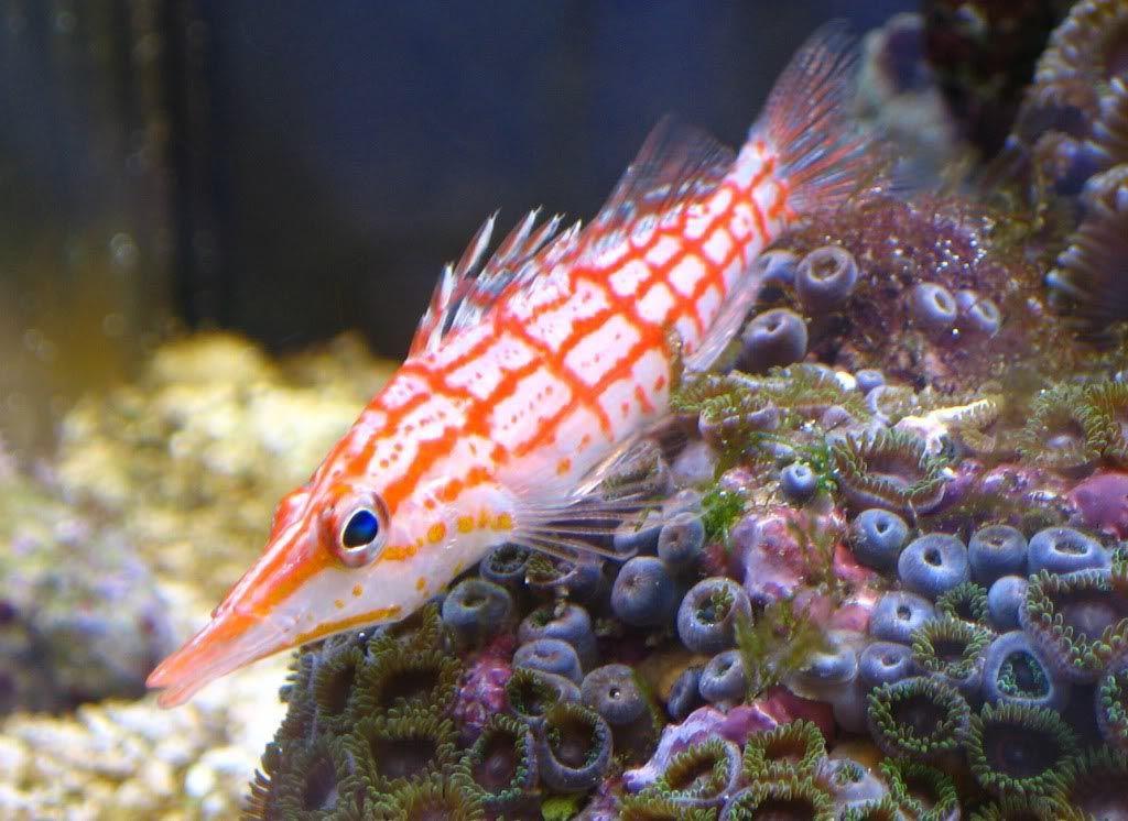 non tropical fish for aquariums aquarium fish tropical fish
