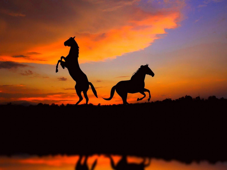 sch ne pferde hintergrundbilder google suche horses in sunset sunrise moonlight. Black Bedroom Furniture Sets. Home Design Ideas