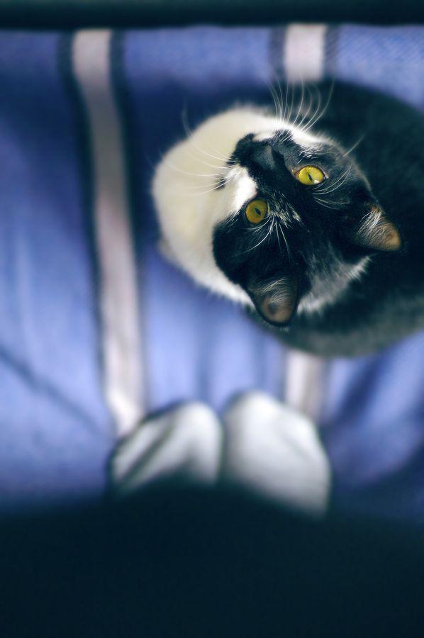 Smartest kitty ever by Miglė Kartanaitė