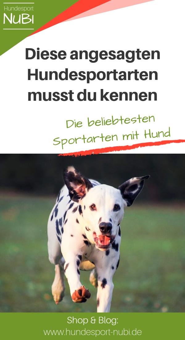 Die Beliebtesten Hundesportarten Fruher Und Heute Hunde Hundesport Hundchen Training