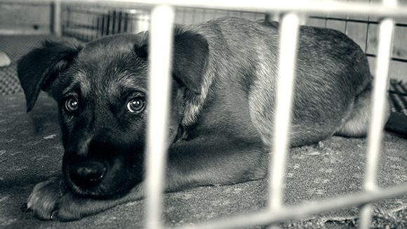 Rspca Nsw Does Not Condone Puppy Factories No Animal Should Be Subjected To Constant Breeding Especially Whe Puppies Animal Welfare Board Stop Animal Cruelty