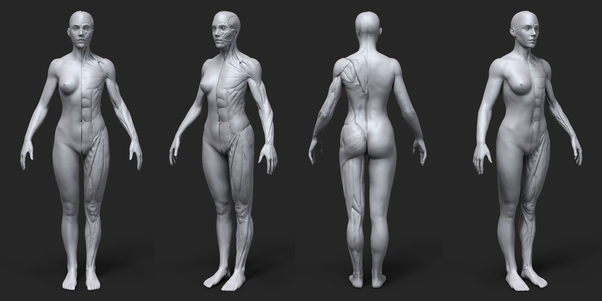 ArtStation - Anatomy Female Tool Reference for Artists !, Pascal ...