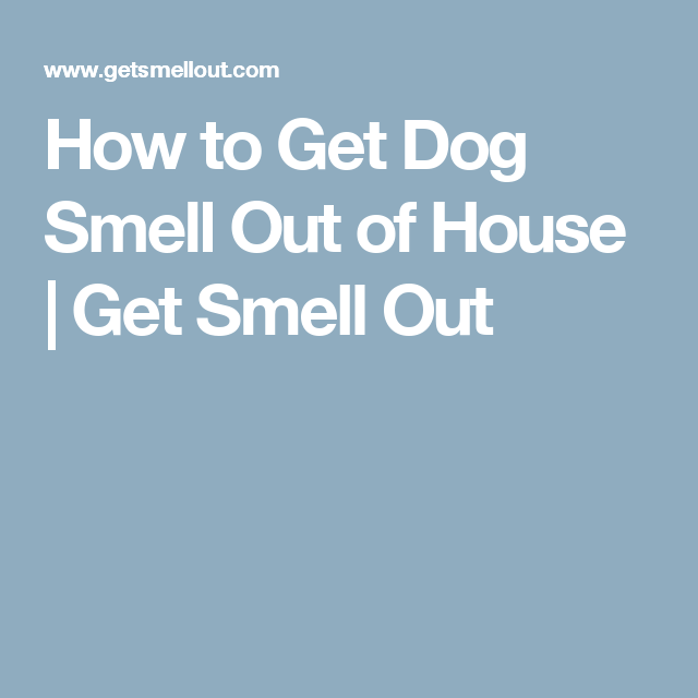 How To Get Dog Smell Out Of House Get Smell Out Dog