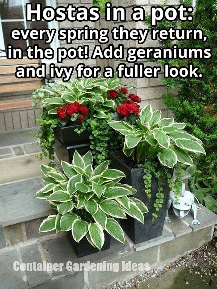 Container Gardening Ideas For Your Home #shadecontainergardenideas