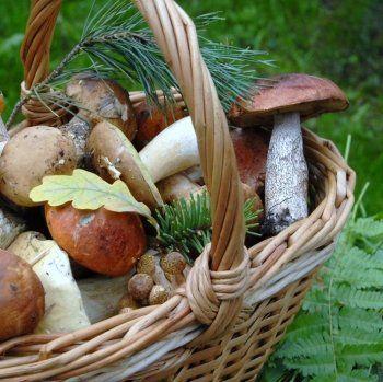 Conseils de chefs : les champignons   Cuisson des ...