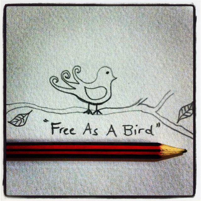 Artwork pencil drawing quote free as a bird photograph instagram kithandco www kithandco