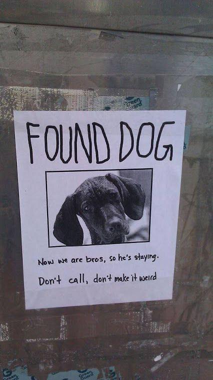 Google+ Goofy Stuff Pinterest - found dog poster template