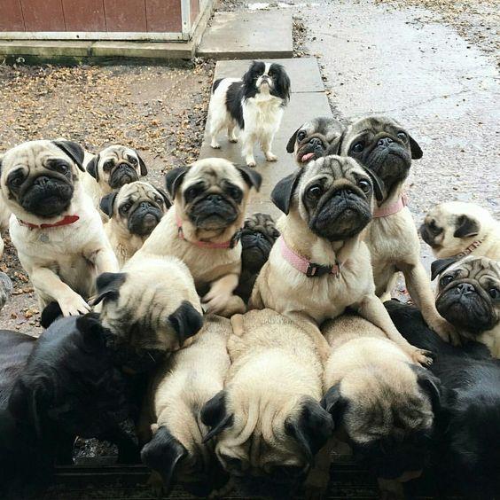 The Human Has Treats Get Them Teresa Matson Tag A Dog Lover