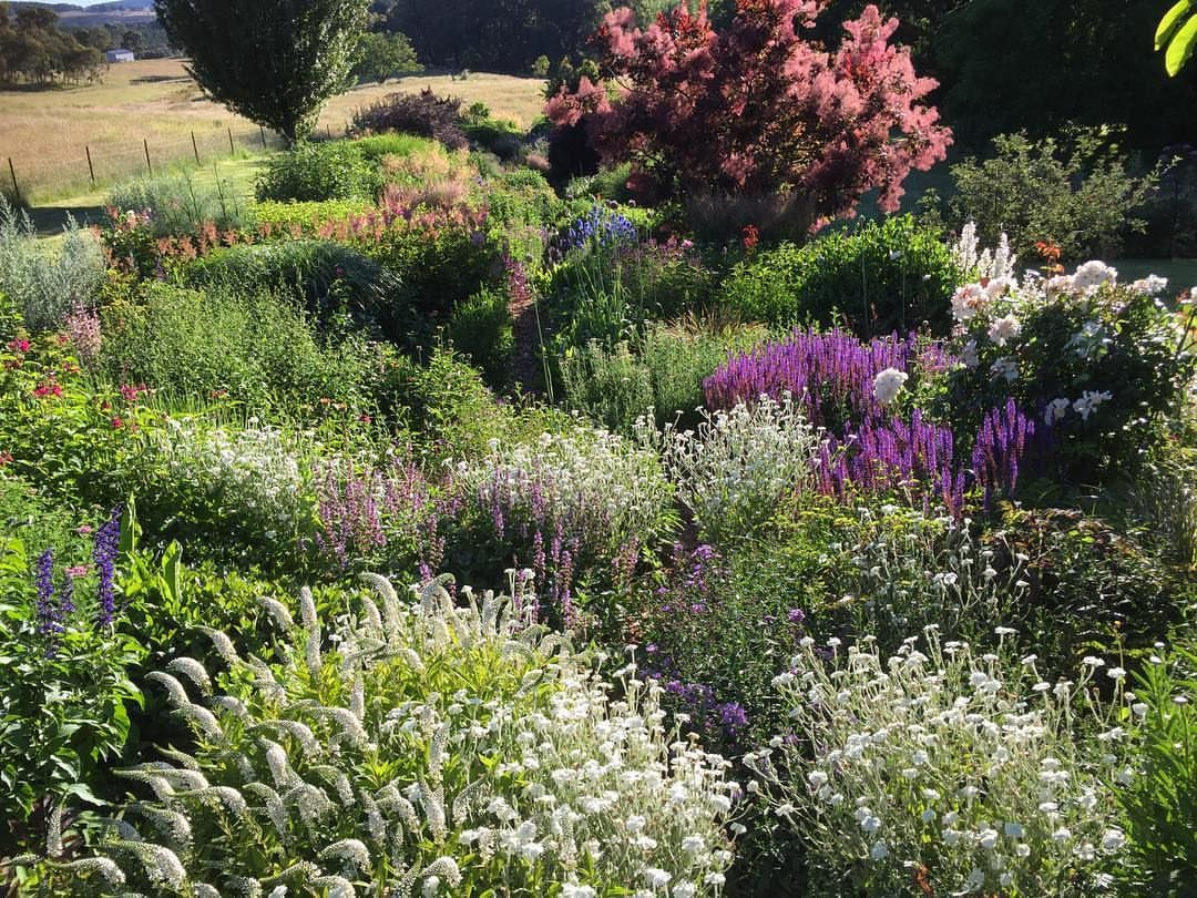Instagram Image By Hillandale Gardens Hillandalegardens With Caption Christmas Morning Summermornings Christmasm With Images Garden Nursery Garden Perennial Garden