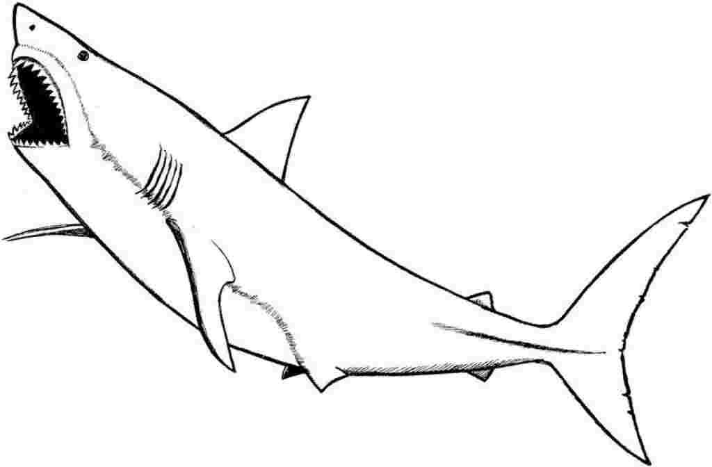 Coloring Festival Sharknado Coloring Pages More Than 78
