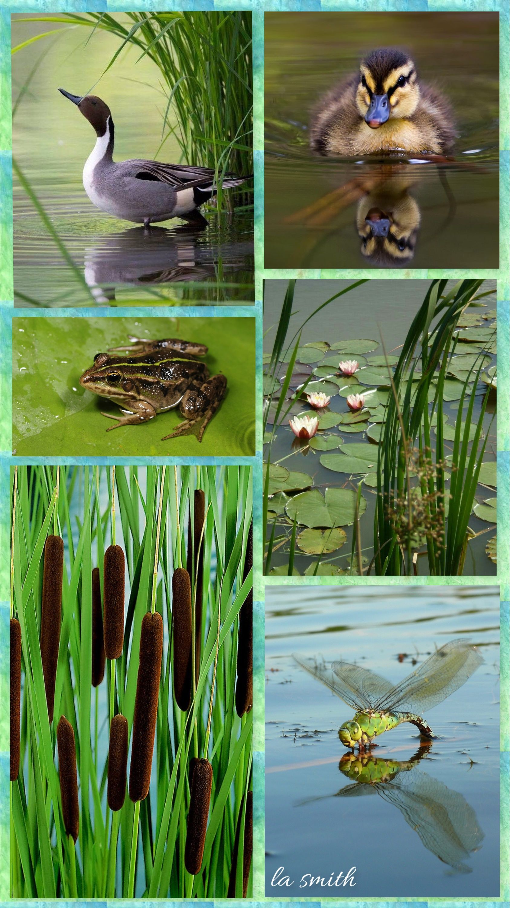 At the Pond by LA Smith Animals and pets, Animals, Wildlife