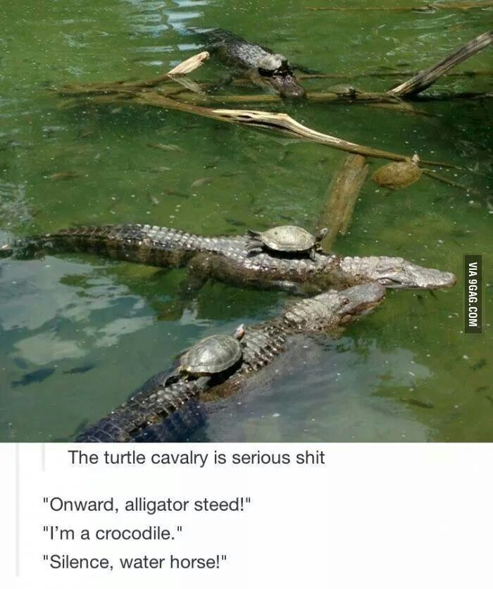 Turtle Army Clean Funny Memes Best Funny Pictures Funny Pictures