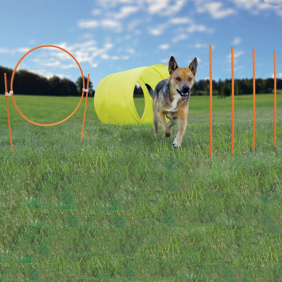 Ready to get your pet started with agility training? This is the perfect kit to get started! This kit features a convenient travel bag, six 18-inch weave poles, a hoop jump and a tunnel. Features - In